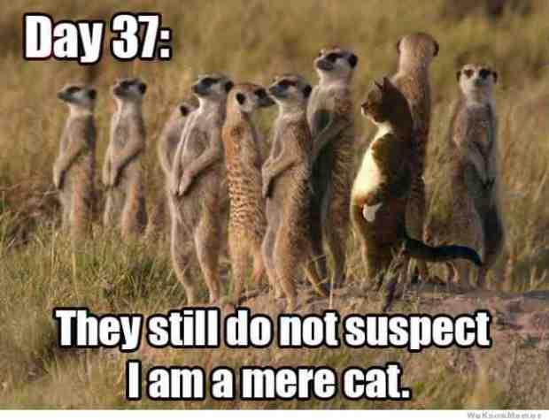 via http://weknowmemes.com/tag/standing-cat-meme/