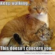 keep walking cats